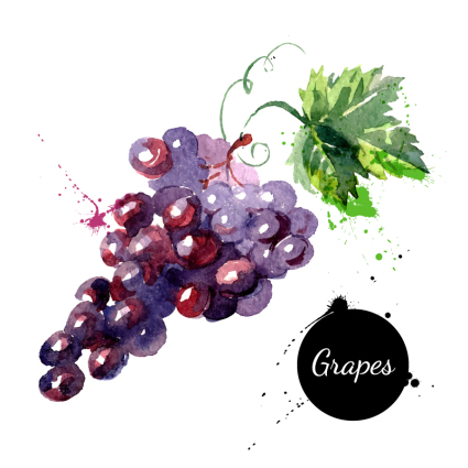 Watercolor delicious grapes vector material