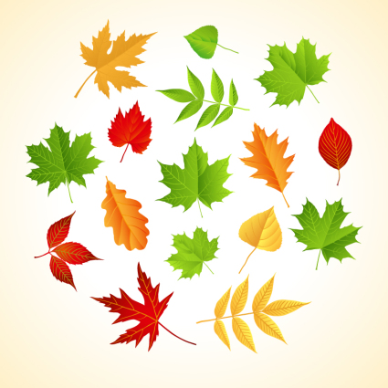 Color leaf design vector material