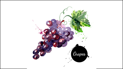 Link toWatercolor delicious grapes vector material