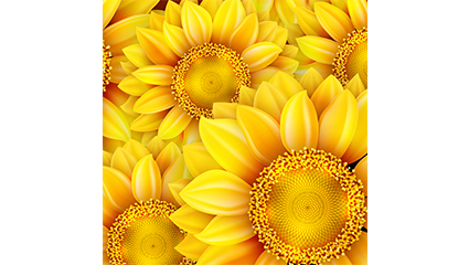 Golden Sunflower seamless background vector