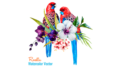 Link toPainted parrot vector material rose water