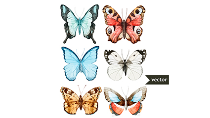 Link to6 beautiful watercolor butterfly vector