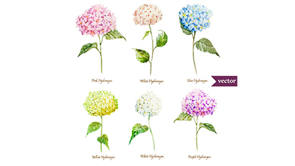 6 beautiful watercolor hydrangea Vectors