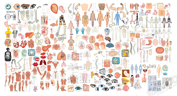 the structure of human organ parts of vector download free