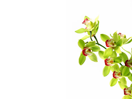 Orchid White Picture Material 1 Download Free Vector Psd