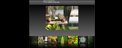 Link toFlash + xml exquisite picture display program