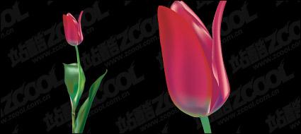 Link toPurple tulip vector material