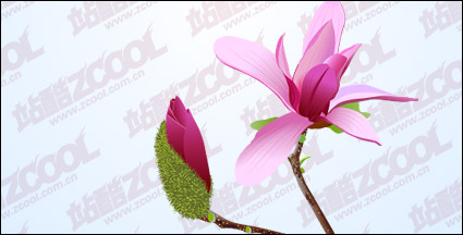 Link toPink magnolia vector material