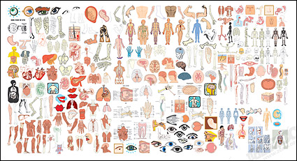 Link toThe structure of human organ parts of vector