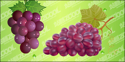 Bunch of grapes vector material