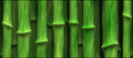 Green bamboo background of the picture material