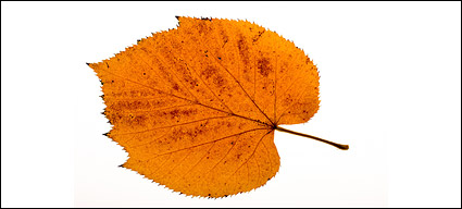 Photos of autumn leaves material