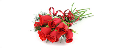 A bouquet of red roses picture material