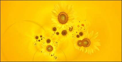 Sunflower picture background material-7
