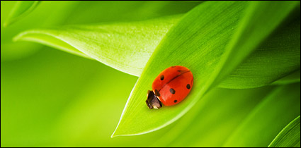 Floating plants and insects picture material-7