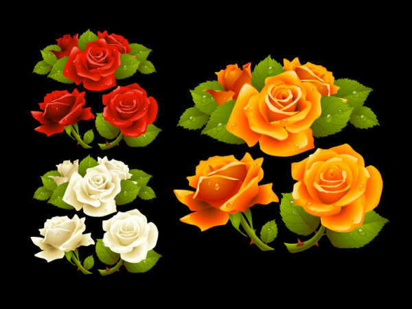 What a beautiful rose Vector