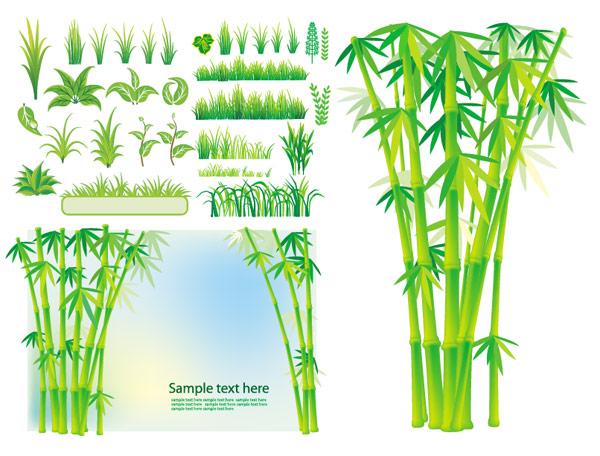 Vector bamboo grass plant