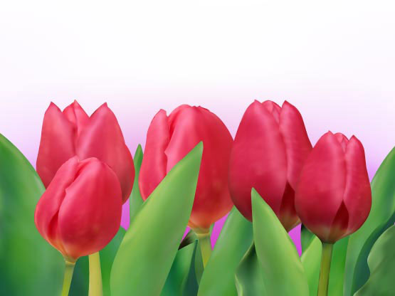 Bright tulips 01 - vector