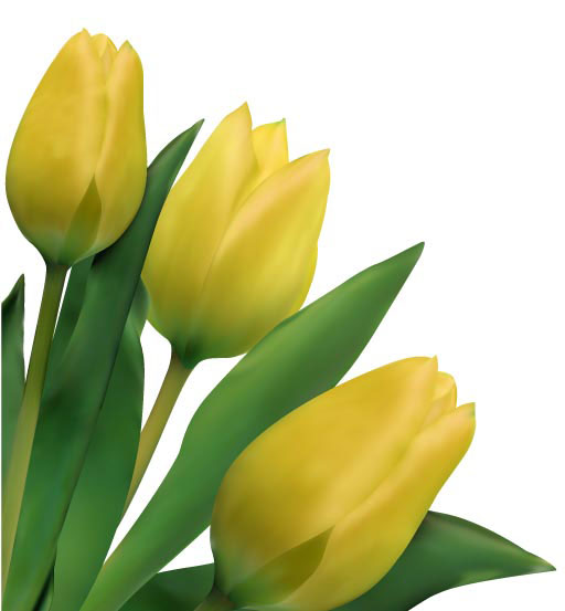 Bright tulips 03-- vector material
