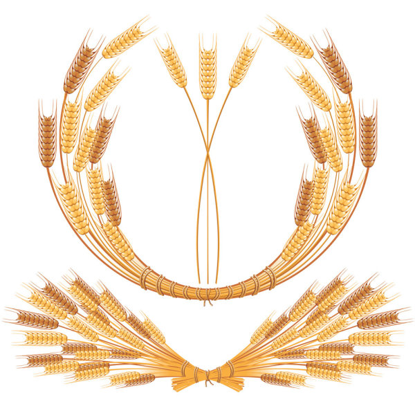 Yellow wheat 05-- vector material