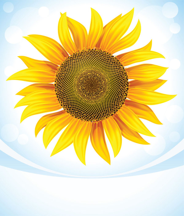 sunflower 05 vector download free vectorpsdflashjpg
