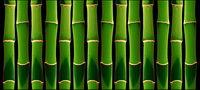Verde de bamb¨² de fondo de la imagen material-2