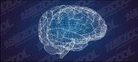 Mod��le en 3D du cerveau de type vecteur mat��riel