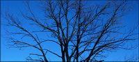 Es gibt kein Material, Blätter von Bäumen