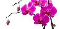 Orchid blanc mat��riel-9