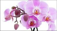 Orchid blanc mat��riel-2