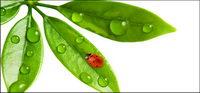 Schwimmende Pflanzen und Insekten Bildmaterial-10