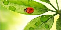 Schwimmende Pflanzen und Insekten Bildmaterial-8