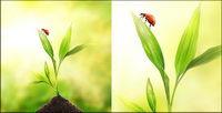 Schwimmende Pflanzen und Insekten Bildmaterial-2