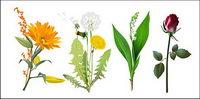 Quatre sortes de fleurs Vector mat��riel