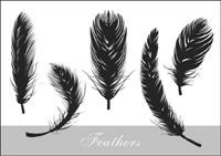 vecteur silhouette r��aliste plume