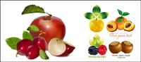 Fruchtansatz Vektor Material