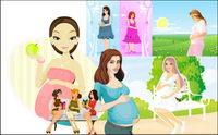 7 Schwangere, Vector
