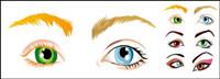 Vector - schöne Augen