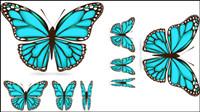 Schöner Schmetterling Material 03 - Vektor