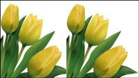 Lumineux tulipes 03 - mat��riel vecteur