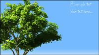Bäume Vektor Material -2