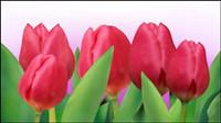 Tulipes lumineuses 01 - vecteur