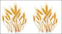 Gelbe Weizen 01 - Vektor Material