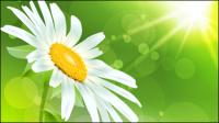 Fleurs exquises 04 - mat��riel vecteur