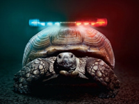 Deputy increase the potential of turtle