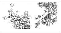 Fleur papillon, coquelicot, bleuets, poires, fleurs de la cerise