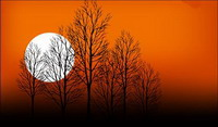 Sunset Tree Dusk Moon Vector