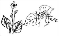 Vector Pinsel Pflanzenmaterial