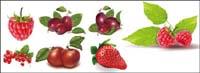 Grandes baies rouges, vecteur de fraises