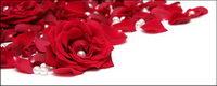 Pearl p��tales de roses rouges
